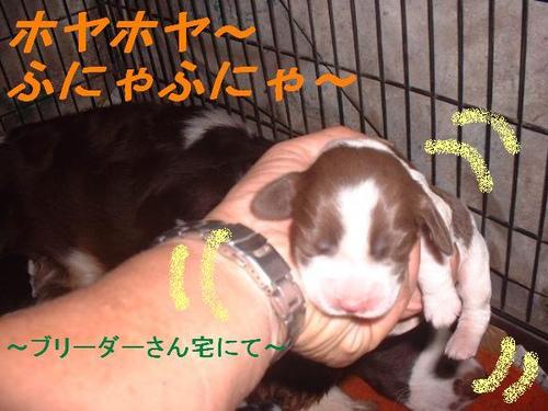 Ninomiya003_convert_20111104224244