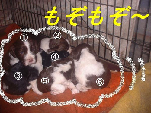 Ninomiya012_convert_20111108224139